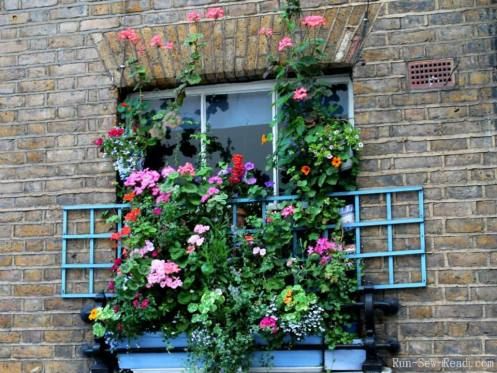 Window trellis-w