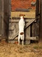 Jeremy back fence-a--watermark