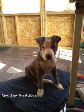 Rufus sitting1--watermark