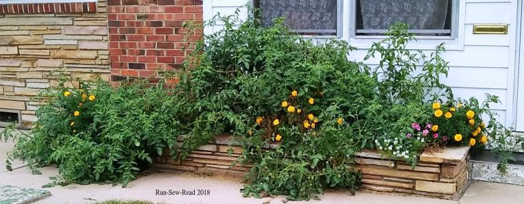 Tomato plant 2018