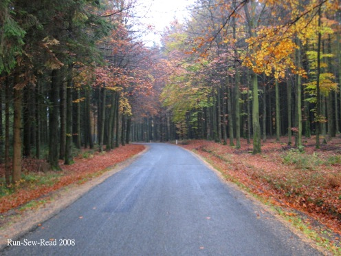 Tree lined road 2 a
